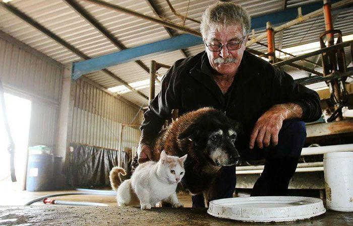 Maggie con su dueño y uno de sus gatos. Maggie vivía en una granja rodeada de gatos, paseando y jugando con ellos.