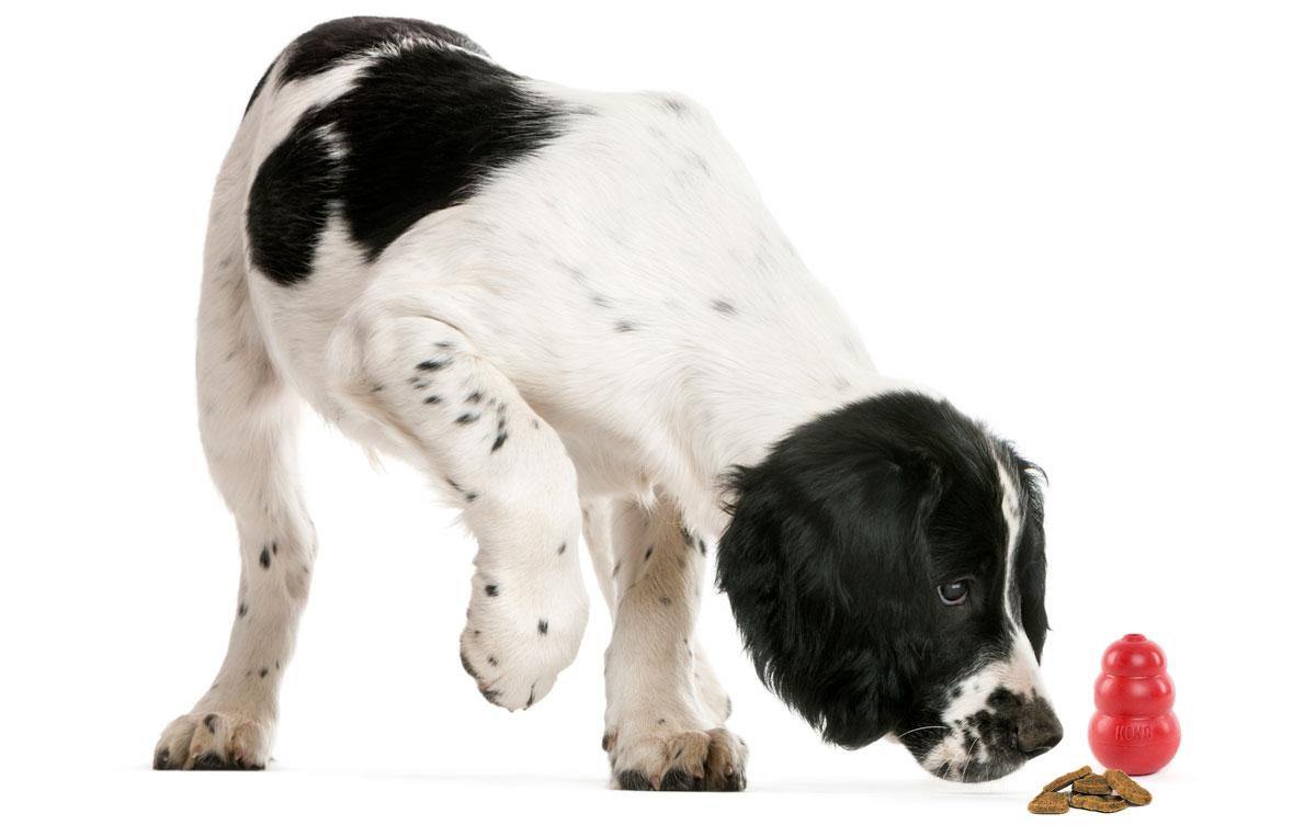 Perro oliendo su juguete y golosinas