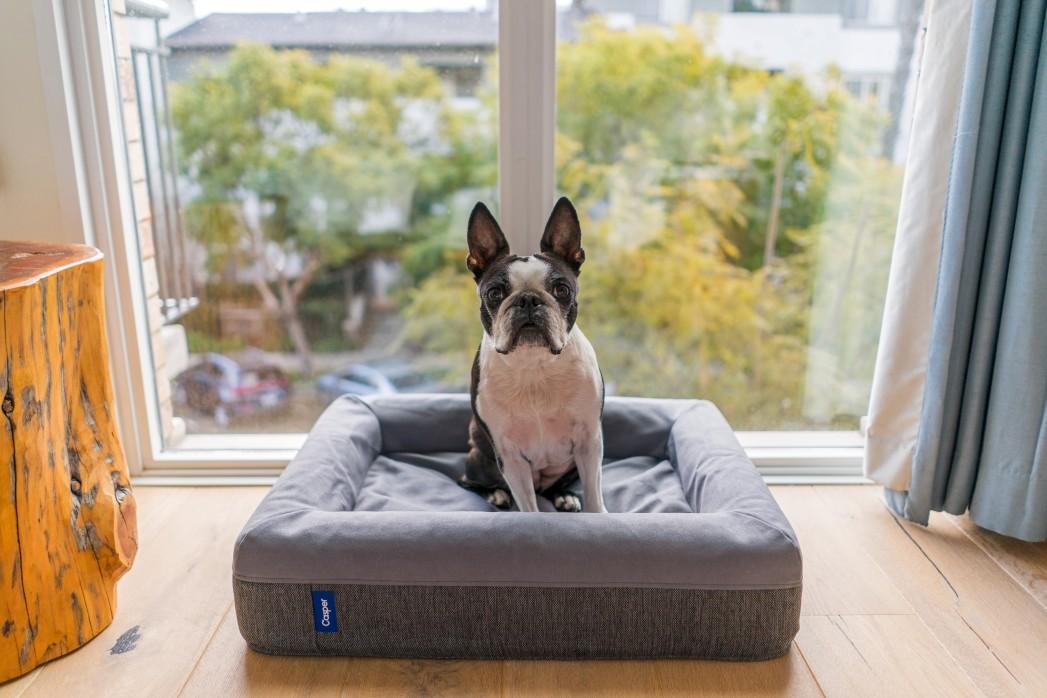 Perro sentado en cama cuadrada
