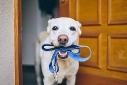 perro entrena