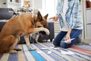 persona riñendo al perro por destrozos en la casa