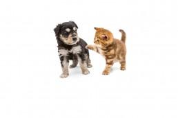 Cachorro de perro y gato