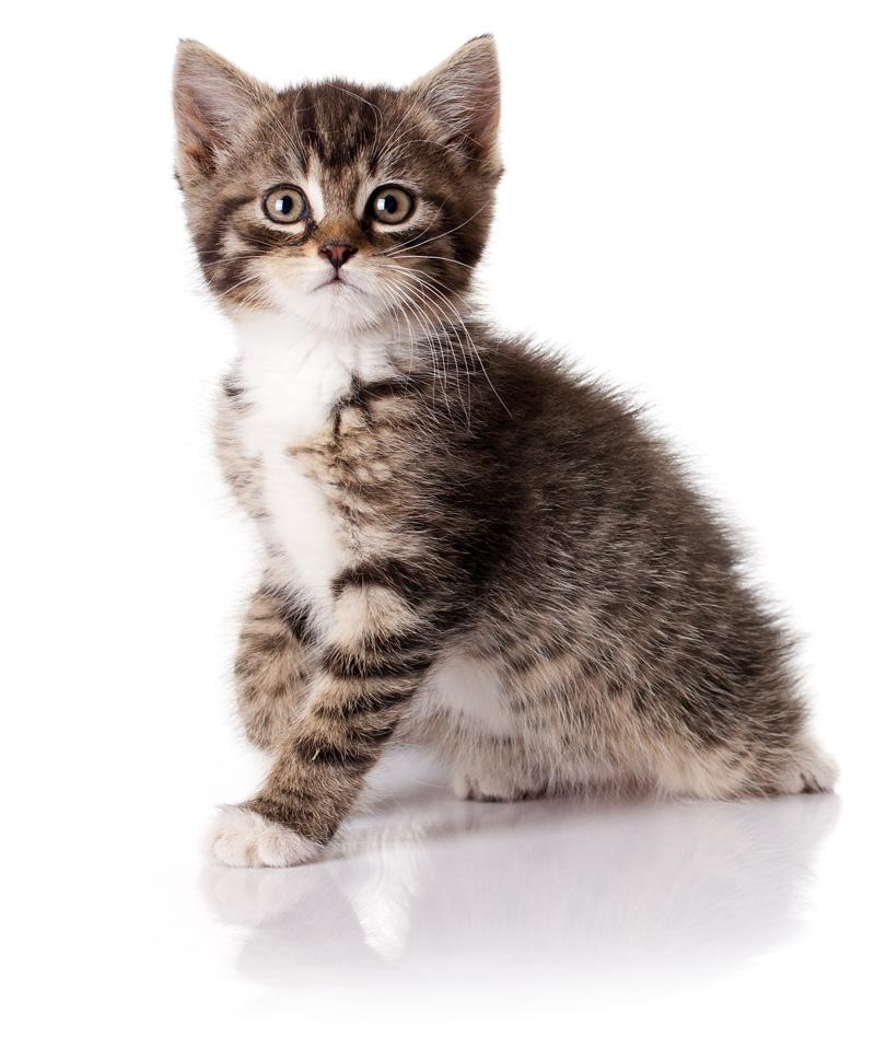 Cachorro de gato