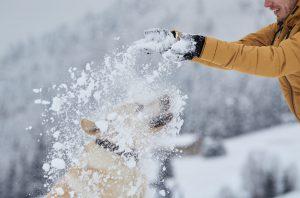 Tirando nieve por encima al perro