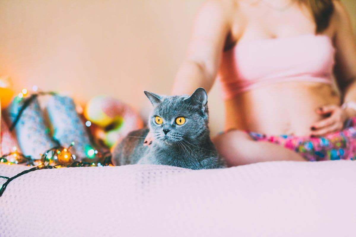 gato con embarazada