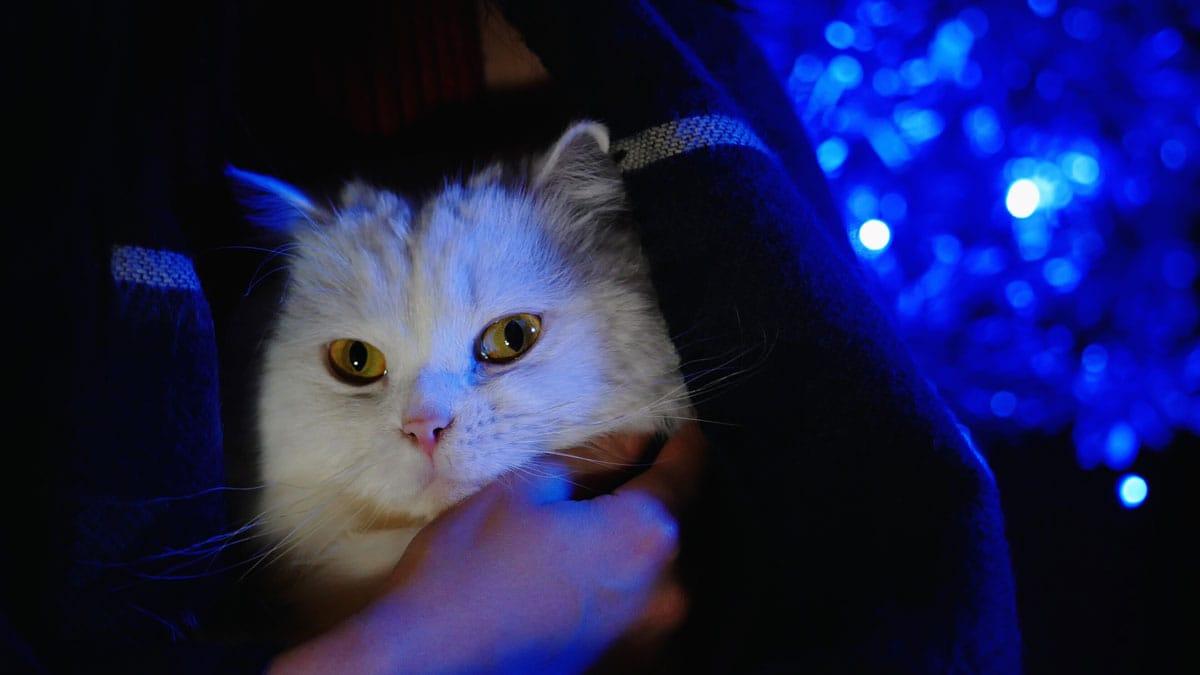 los gatos no ven en la oscuridad