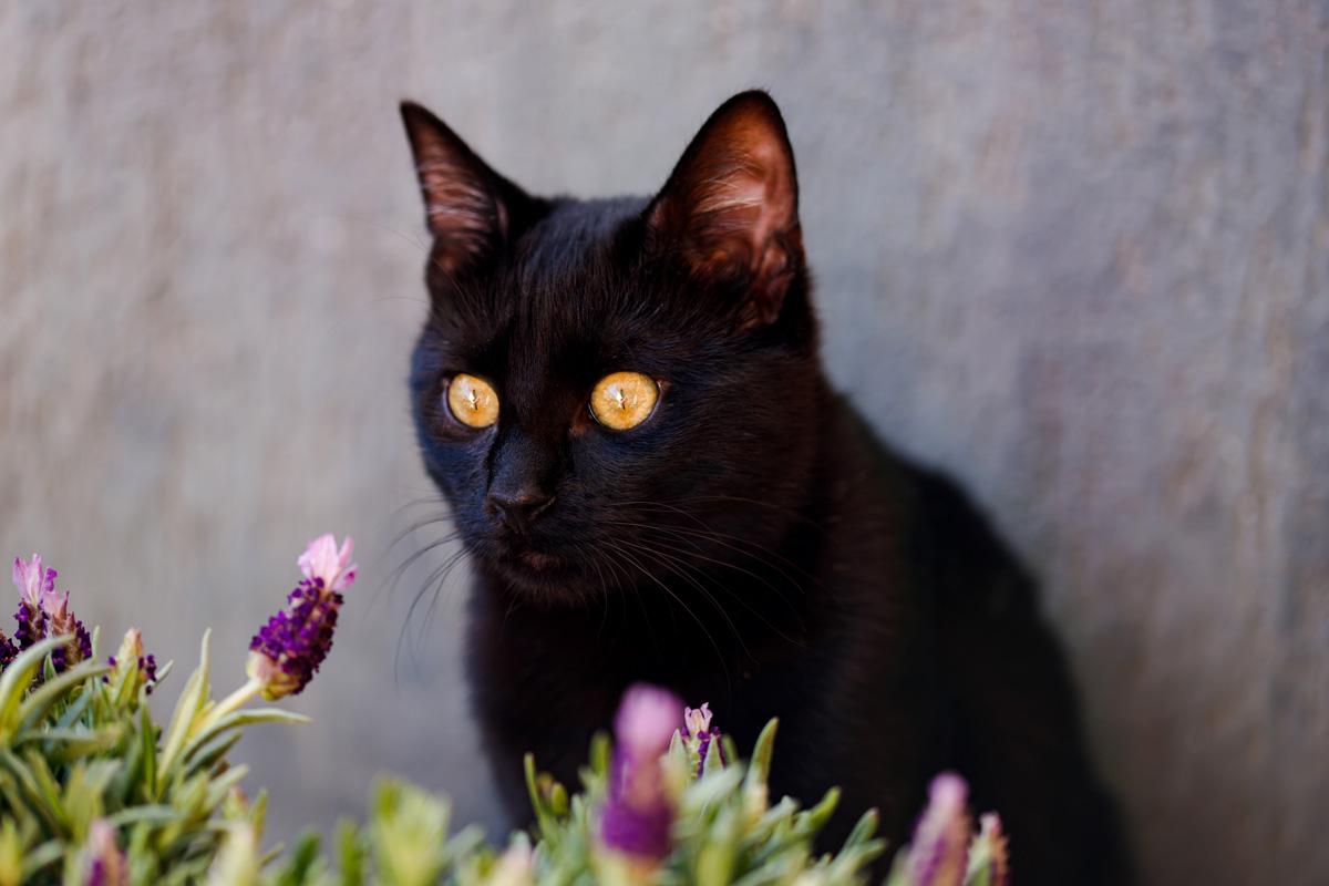 gato mirando planta