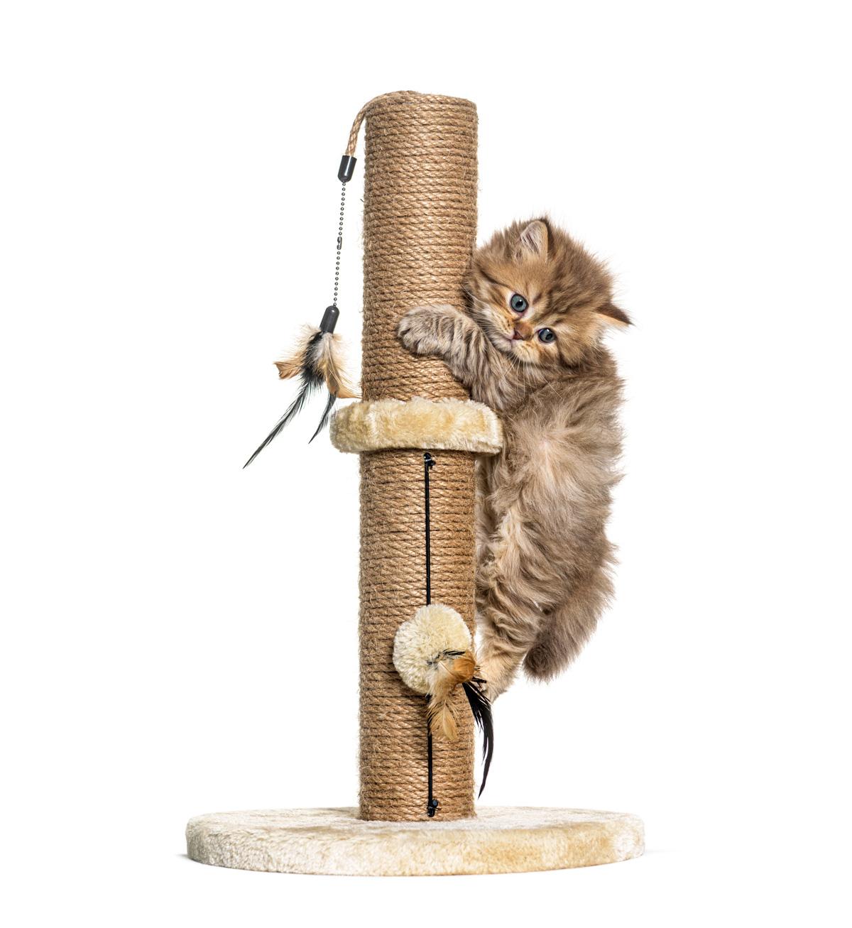 Gatito subiendo por el rascador